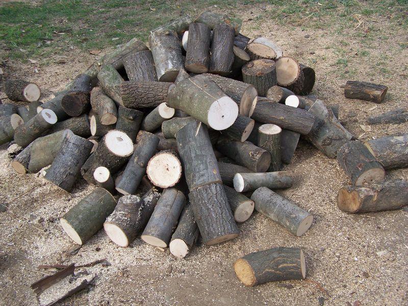 Rönkfa eladó érd